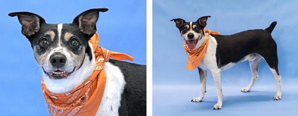 © Pawsitive Shelter Photography   Adopt Ferguson from Orange County Animal Services, Orlando, FL