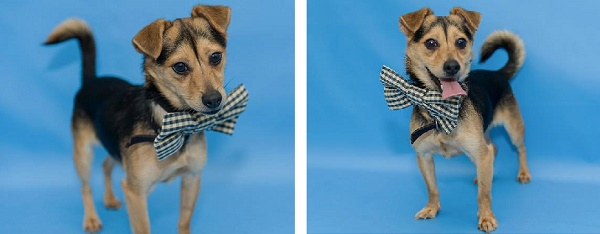 Adopt Jake Ice. He is is adoptable from Orange County Animal Services, Orlando, FL