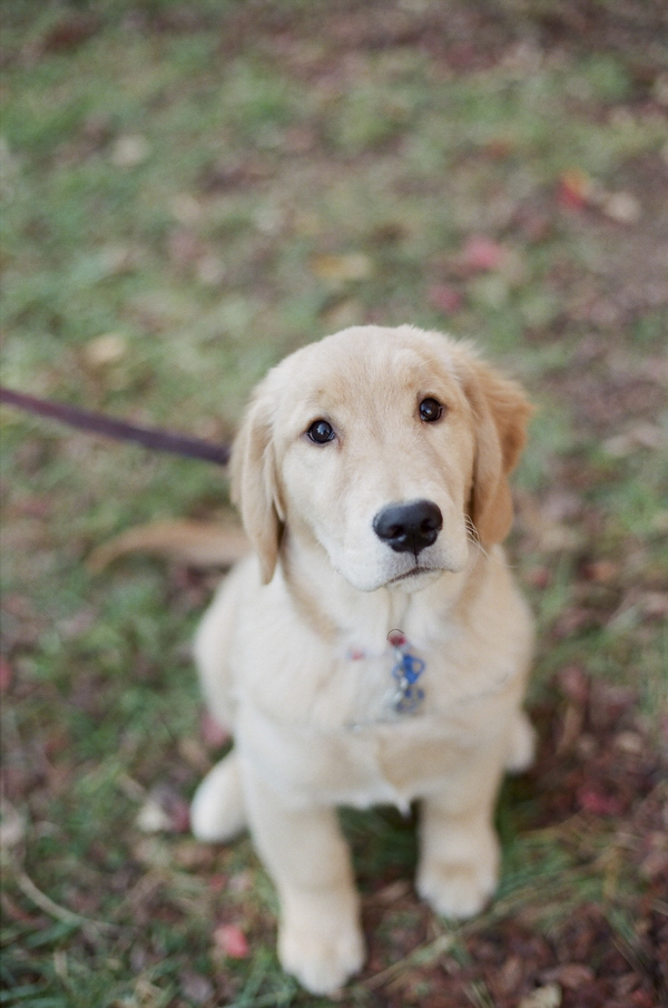 Allison Mannella Photography-fall family-dog portraits-18