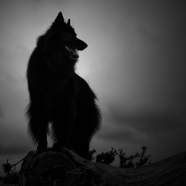 © Wolf Shadow Photography | Daily Dog Tag | By the Light of the Moon
