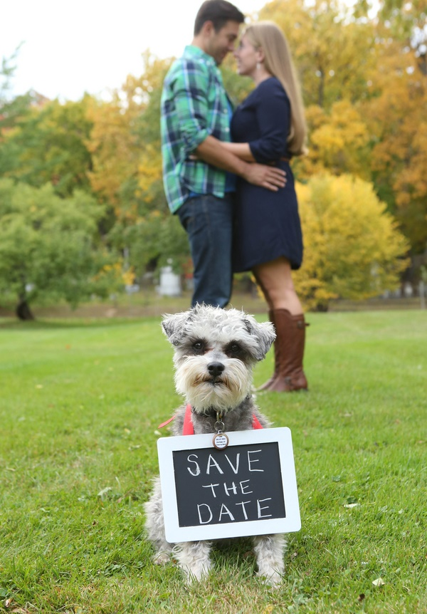 © 13 one photography |Schnauzer wearing save-the-date-sign