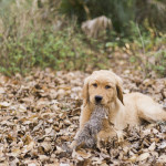 Emily Katherine Photography Fall Engagement Session puppy-15