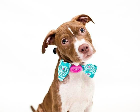 © Pawsitive Shelter Photography   Jake the puppy is is adoptable from Orange County Animal Services, Orlando, FL.