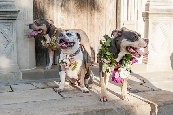 © Jenny Karlsson Photography | pitties in flowers, flower power, happy dogs wearing flowers