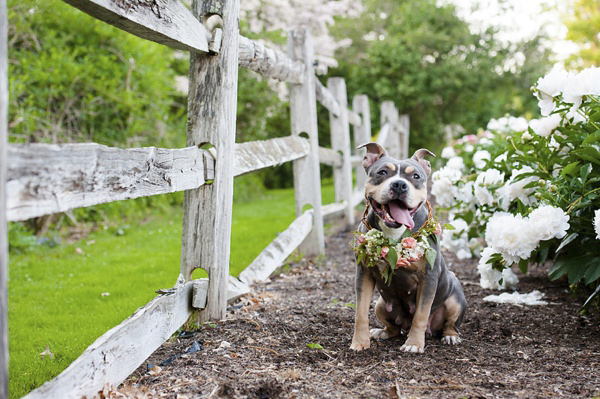 © Jenny Karlsson Photography | florist, professional photographer help rescue dog with amazing photos
