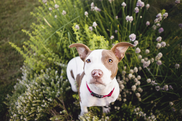 © Jessica Cobb Pet Photography | Lifestyle-dog-photography, Griffin, GA pet photographer, inspiration for dog portraits