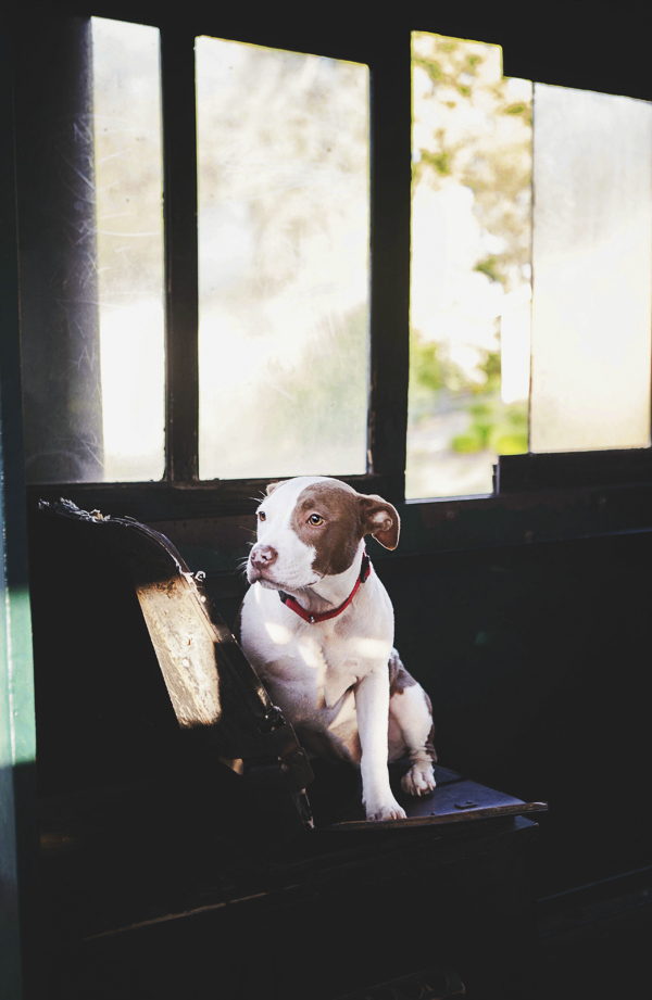 © Jessica Cobb Pet Photography- dog sitting in abandoned house, on location pet photography