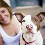 Gorgeous on location photos of rescued brown and white pit bull