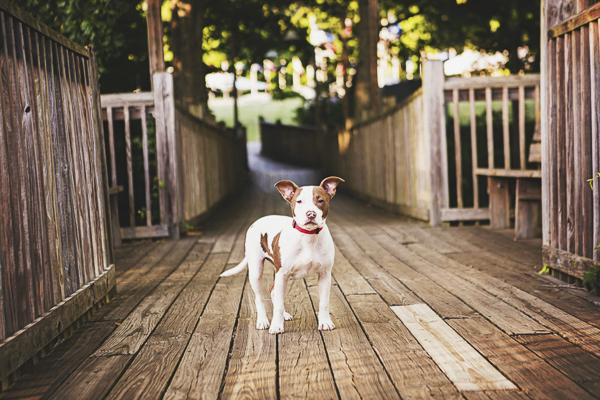 © Jessica Cobb Pet Photography | Lifestyle-dog-photographer, dog on boardwalk, heartwarming dog photos