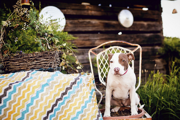 Jessica Cobb Photography- Lifestyle-dog-photography-8