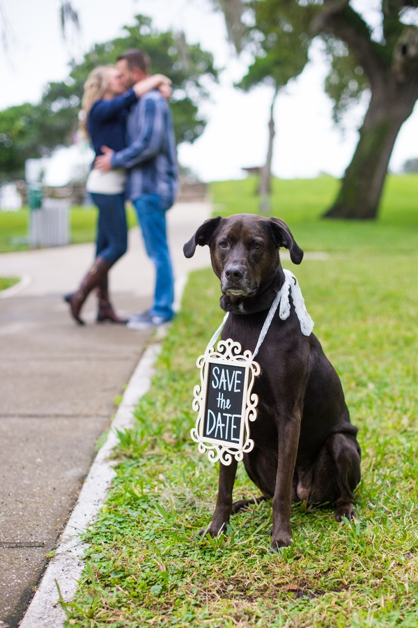 © Mark Dickinson Photography, dog-wearing-save-the-date-sign, lab wearing save the date sign, engagement session with dogs