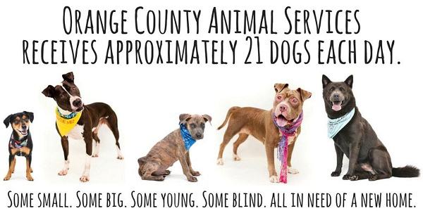 Orange County Animal Services   © Pawsitive Shelter Photography