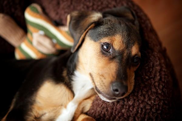 Banff-wedding-engagement-photographer,rescue-dog