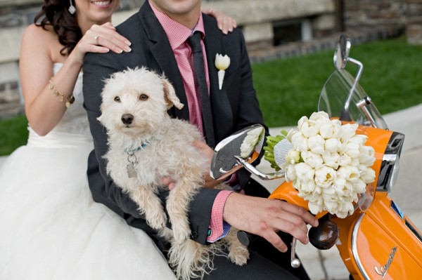 © Orange Girl | Daily Dog Tag | Yorkie Poo, bride and groom on Vespa