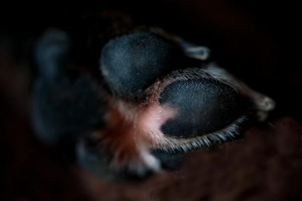 heart-shape-on-paw