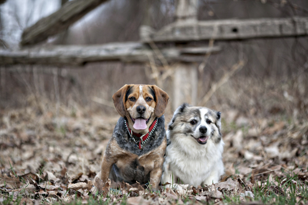 © Paw Prints -Pet -Portraits by Charlene | 2 dogs, double trouble, dog dynamic duo, Pittsburgh lifestyle dog photography