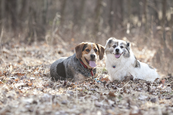 © Paw Prints -Pet -Portraits by Charlene | Dog duo, best dog friends, hound mix and small fluffy dog