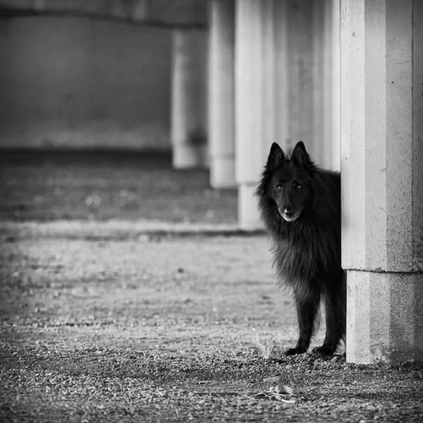 © Wolf Shadow Photography | Daily Dog Tag | WolfCub Peeking