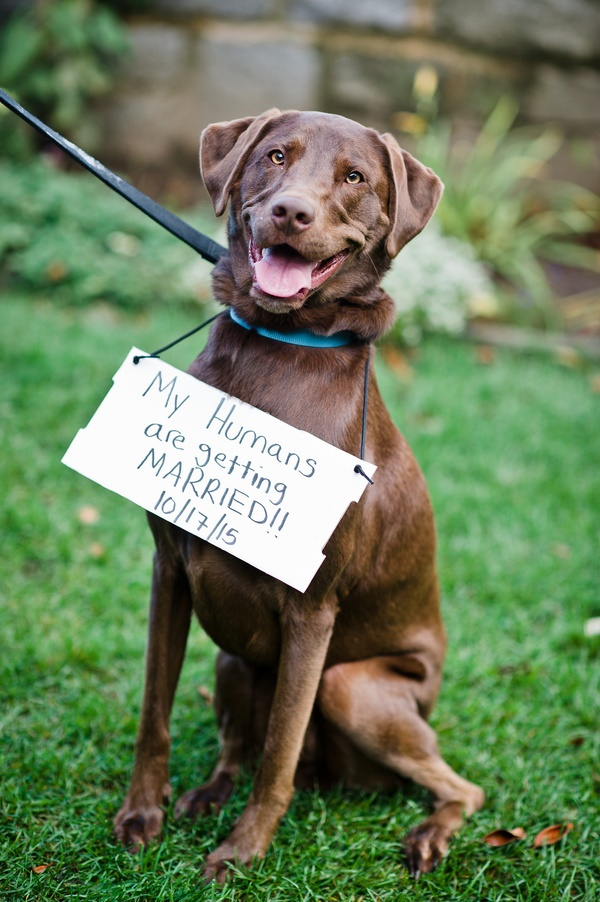 © Robyn Blasi Photography  | super happy retriever with save the date sign, rescued dog finds forever home