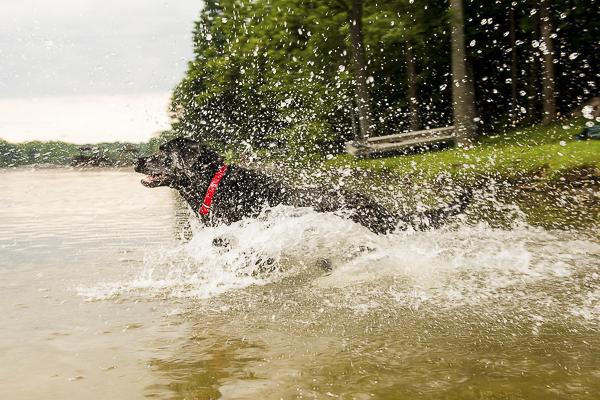© Silent Moment Photography |  lifestyle dog photography. Black Labrador Retriever