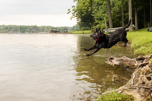 l© Silent Moment Photography | lifestyle dog photography. Black Labrador Retriever, water loving Labrador Retriever