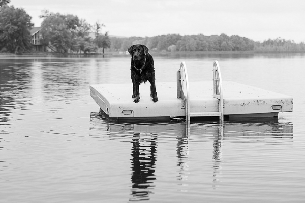 l© Silent Moment Photography | lifestyle dog photography. Black Labrador Retriever on dock