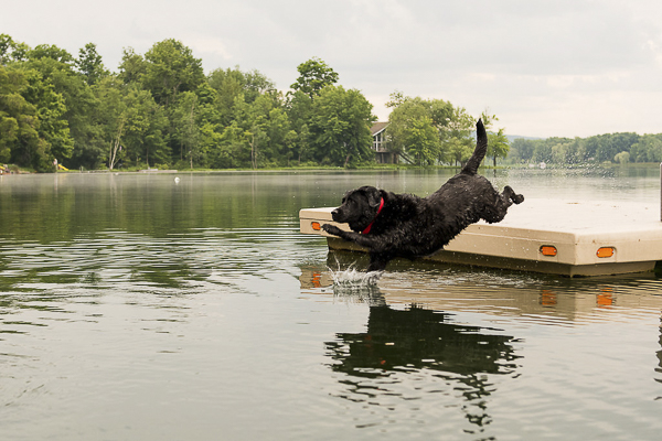 © Silent Moment Photography |  lifestyle dog photography. Black Lab jumping off dock