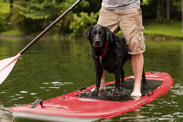 © Silent Moment Photography |  lifestyle dog photography. Black Lab on paddleboard