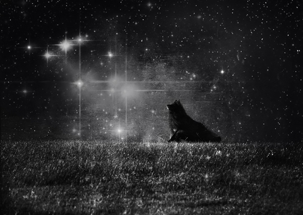 © Wolf Shadow Photography | Daily Dog Tag | Spirit in the sky
