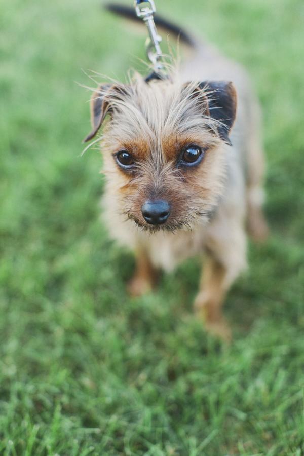 © Tiffany Tcheng Photography | on location lifestyle dog photography, Flagstaff, AZ-pet photographer