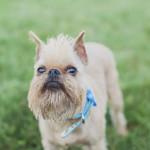 Tiffany Tcheng Photography, lifestyle dog photography-3