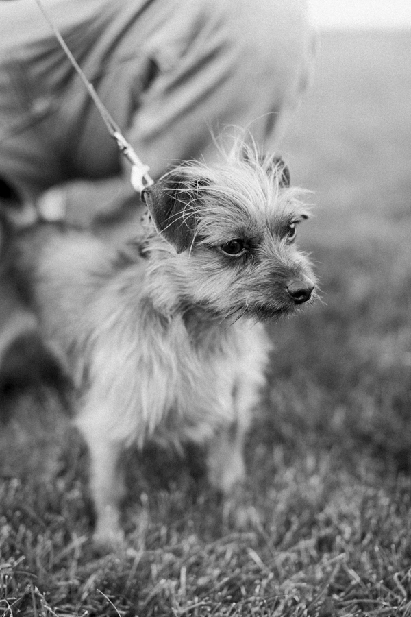 © Tiffany Tcheng Photography | Terrier mix, lifestyle dog photography, family photos with dogs