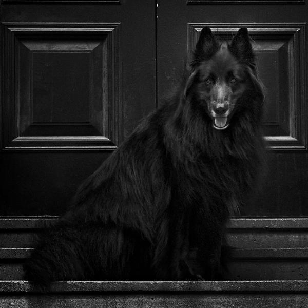 © Wolf Shadow Photography | Daily Dog Tag | WolfCub against black door