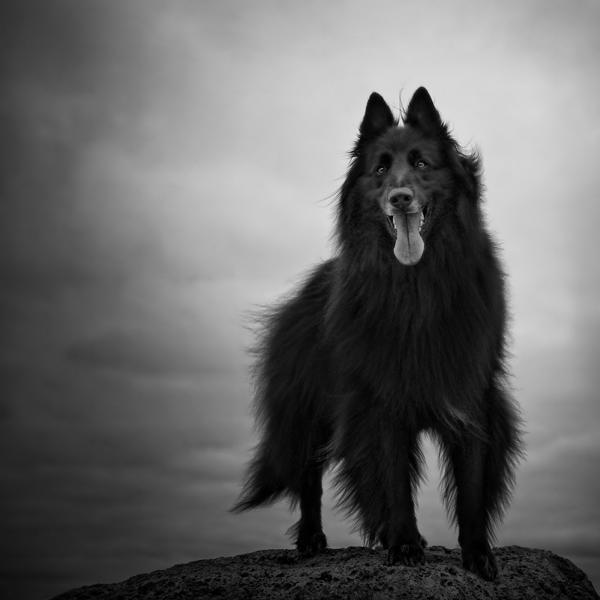 Focus Wolfcub Daily Dog Tag