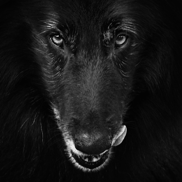 © Wolf Shadow Photography | Daily Dog Tag | WolfCub licking his lips