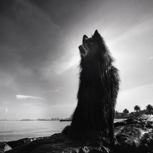 © Wolf Shadow Photography | Daily Dog Tag | WolfCub looking heroic