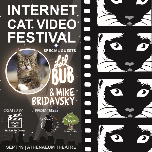 Caturday: Internet Cat Video Festival