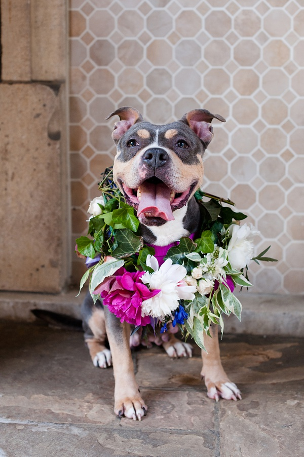 © Jenny Karlsson Photography | adoptable-Pit-bull-flower-crown, Adopt Bailey from Biggies Bullies, Pittsburgh PA