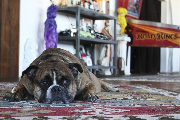 Bethany Nauert Antonio Ballatore, English Bulldog, interior design photographer, lifestyle dog portraits