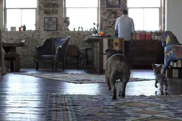 © Bethany Nauert Antonio Ballatore, Chewie, dogs on furniture, English Bulldog, little dog, interior design photographer