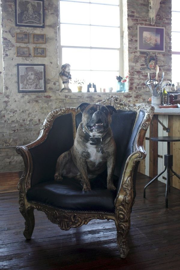 © Bethany Nauert | handsome English bulldog, Chewie, dogs on furniture, Antonio Ballatore, dogs on furniture
