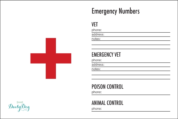 DIY First Aid Kit For Dogs - Daily Dog Tag