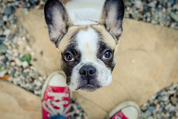 © Mara Casey Shoots | French Bulldog, lifestyle dog photography, LA, on location dog photographer