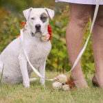 Meghan Rolfe Photography Best Dogs, Wedding dogs-8