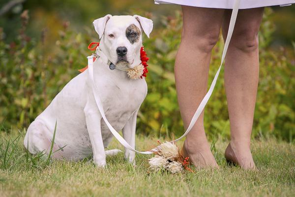 Best Dogs:  Pandora, Gus & Beatrice