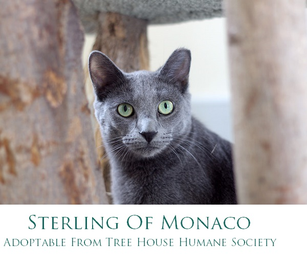 SterlingofMonaco-Adoptable from Tree House Humane Society