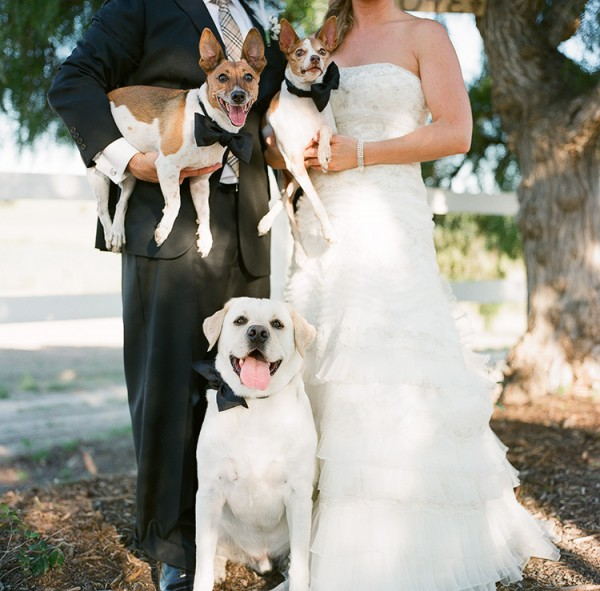 best dogs, bride and groom, Bay area pet photography