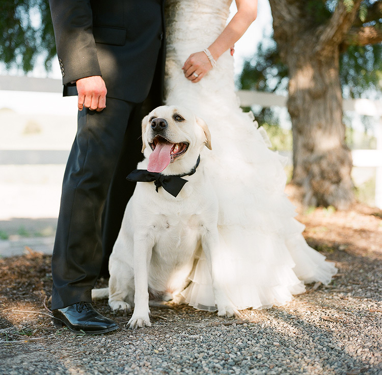 Northern California color film pet photography
