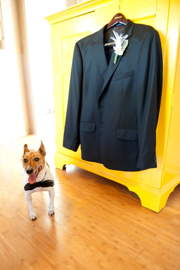 Best dog and groom's tux