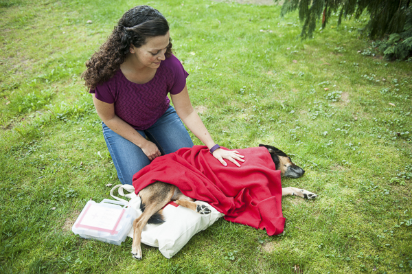 © Alice G Patterson Photography -First Aid For Dogs-, treating dog for shock